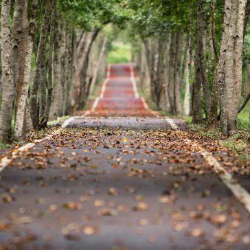 blur-branches-foliage-38537